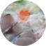 季節の魚介鍋