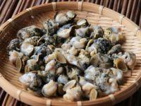 北海道産お刺身用ボイルつぶ貝